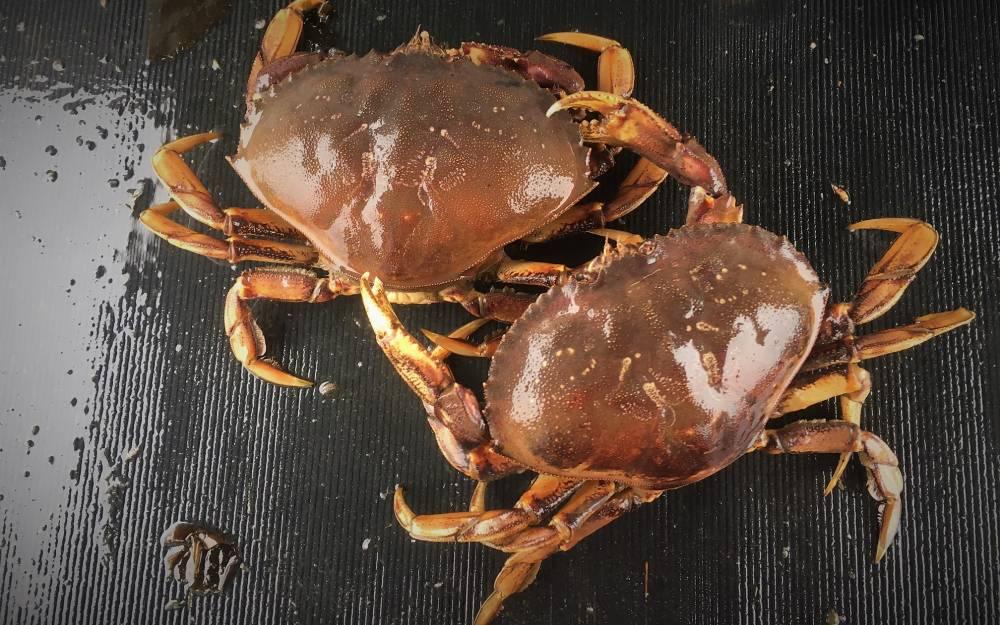 Crab Bait Radio